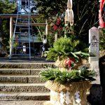 ササニシキの門松 白石神明社へ