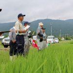 7月下旬 全圃場の生育調査
