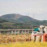 10月 稲刈り 白川/大平