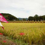 3年目 今年も自然乾燥米を全国へ 大平