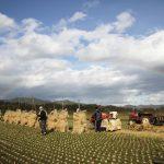 晩秋の福岡 木須さん一家の自然乾燥米出荷へ