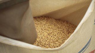 自然乾燥米 第一弾脱穀 大平にて
