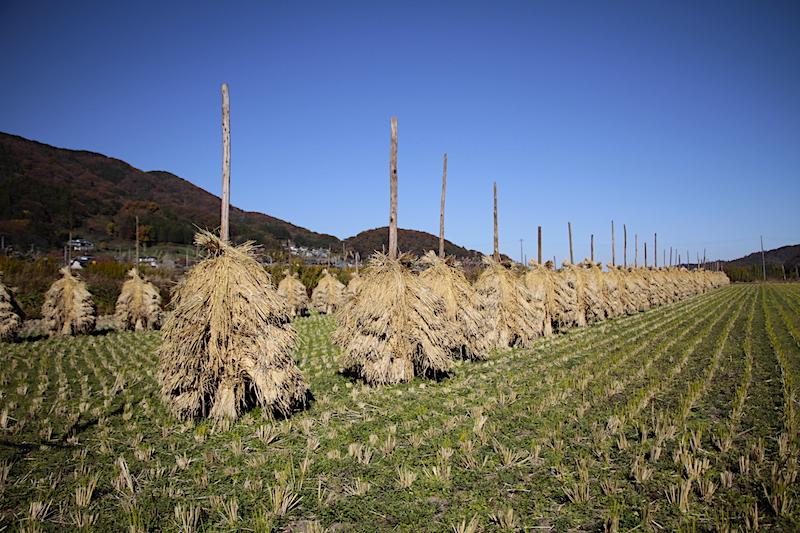 立冬 自然乾燥米第3弾出荷へ