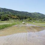 田植え機2台 日が沈むまでフル稼働 斎川
