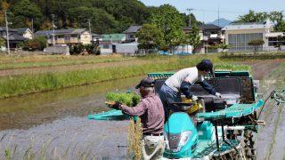 仲間と旨い米を追う4年目のプロジェクト 大平