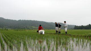 梅雨6月 生育調査
