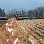 収穫と災害の後片付け 福岡