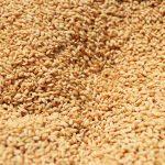 稲作シーズン到来 播種作業、田植え準備