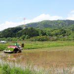 ササの田植え始まる 白石・斎川