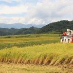 今年も1.8ha分のササニシキ収穫 福岡
